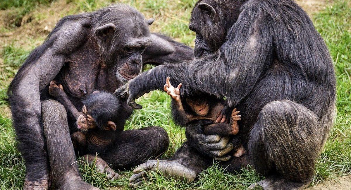 singes et bébés singes
